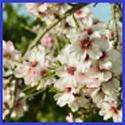 A Springtime Journey Towards the Light Great Lent 2020